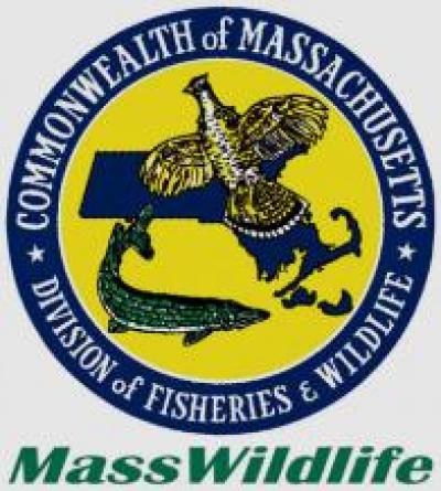 Integrating climate change into the massachusetts state for Mass fish and wildlife
